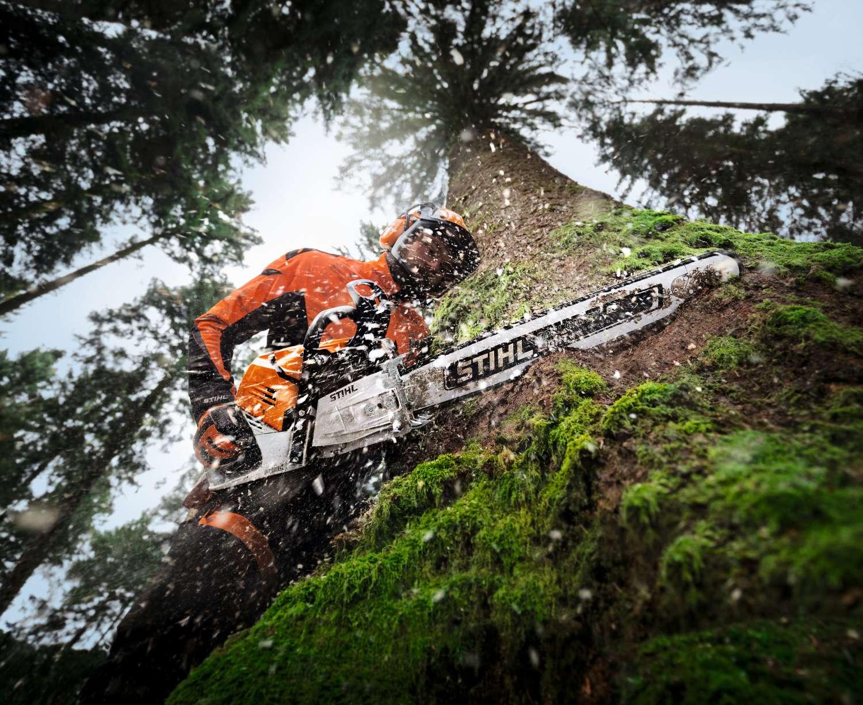 Mann sägt mit der STIHL MS 500i in einen großen vermoosten Baum